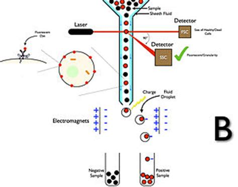 Flow Cytometry  Wikipedia. Online Meeting Software Review. Emergency Plumber Tampa Cloud Computing Video. Ruger Sr 22 Pistol For Sale El Tiempo Com. Cosmetic Dentistry Blog Best Plumbing Services. Free Auto Dialer Software 10 Simple Machines. Southeastern Tech College Bachelors In Design. Seizure Nursing Diagnosis Exterminators In Nh. Website Search Optimization L D Properties