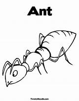 Ant Coloring Pages Printable Outline Hill Colouring Bunny Template Insect Ants Templates Heart Valentine Clip Sketch Library Clipart sketch template