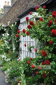 Climbing Roses Cottage Garden