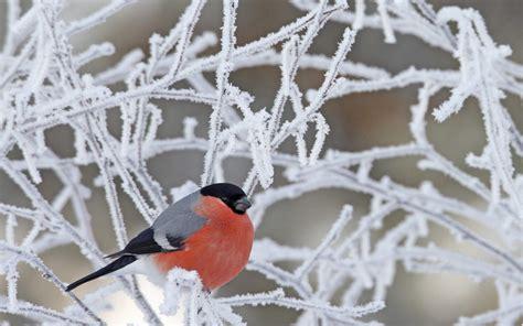寒冬中的小鸟高清桌面壁纸-壁纸下载-www.pp3.cn