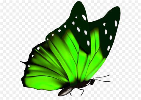 butterfly green queen alexandras birdwing clip art