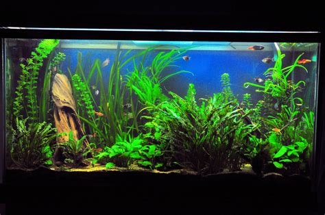 fish aquariums the preferred tank levels for community fish species