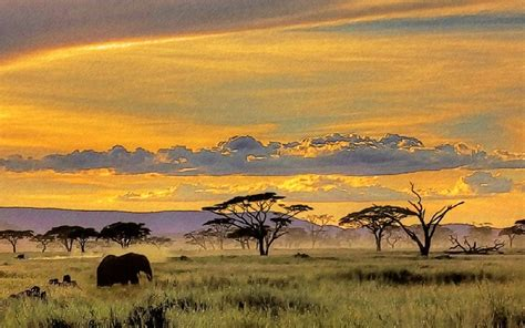 African Safari Wallpaper Yvt2 (1) By Tdouglaspainting On