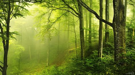 Green Forest Picture by Nature Landscape Trees Wood Forest Leaves Branch