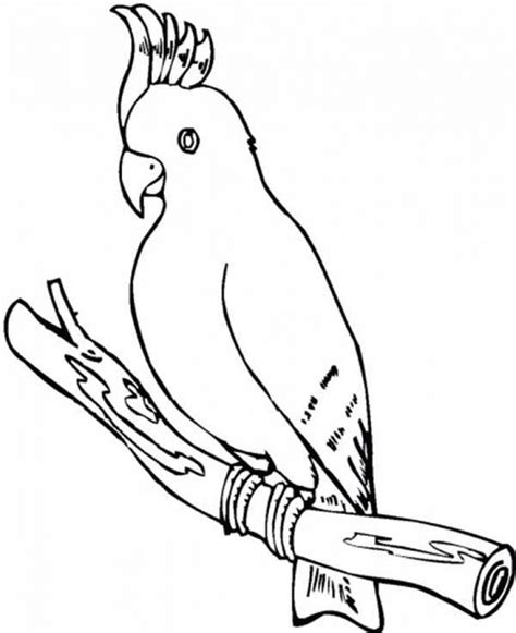 parrot coloring page get this parrot coloring pages free printable 75185