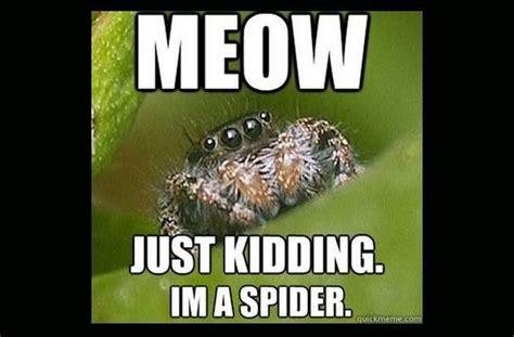 Memes About Spiders - misunderstood spider meme barnorama