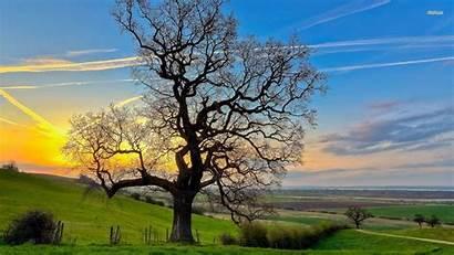 Tree Trees Oak Wallpapers Nature 1080 1920