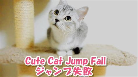 Kitten Fails To Jump Utterly / 完全にジャンプに失敗する子猫【猫