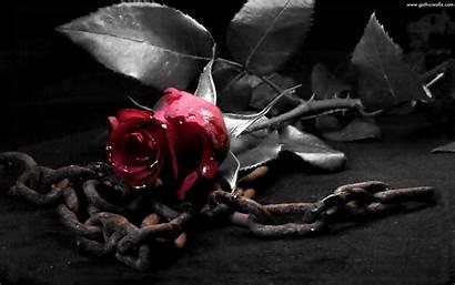 Background Gothic Rose Roses