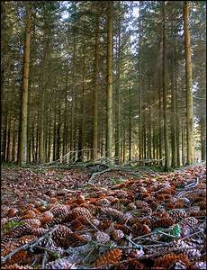 A carpet of Con... Forest Floor Quotes