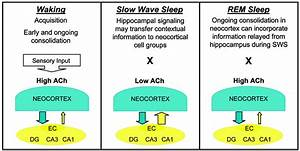 Sleep dreams and memory consolidation, sleeping aid over ...