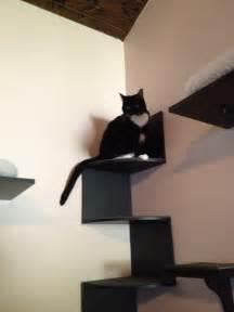 cat shelf diy cat wall cat shelves cat furniture ideas