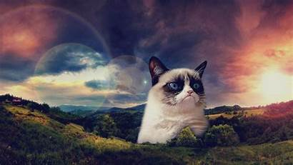 Cat Grumpy Wallpapers Cindy Holdman Mb