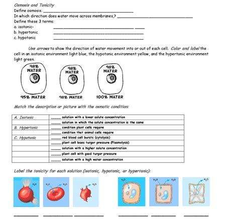 worksheet osmosis and tonicity answer key breadandhearth