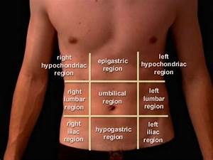 Anatomy of abdomen and regions of trunk