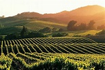 Best Wine Tasting Vacations in the World