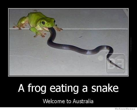 Meme Australia - welcome to australia memes image memes at relatably com
