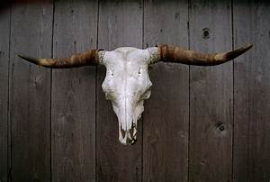 Cow  Cattle  Skull Symbolic Meaning  U2013 Whispers  Channels