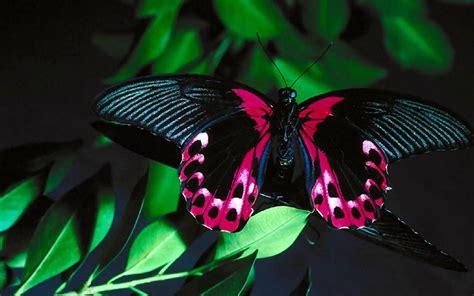 Bilder Kostenlos Schmetterlinge