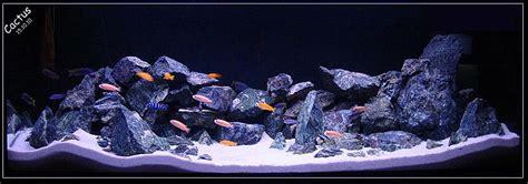 mbuna aquascape mbuna cichlids compatibility my aquarium club