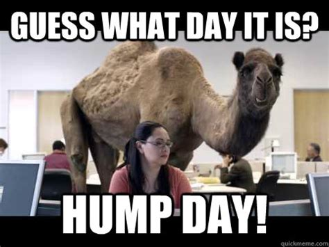 Hump Day Meme Dirty - meme guess what day it is hump day picture picsmine
