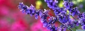 blue flower on pink Facebook Cover timeline photo banner ...