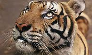 Wildlife Conservation Day