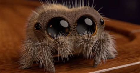Adorable Spider Video Is Curing People Of Their