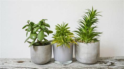 indoor plant trend  parktrent