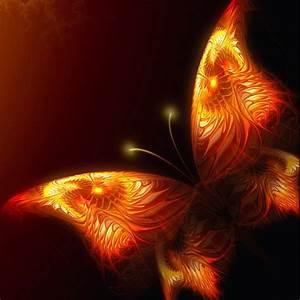 Fire butterfly | fascination | Pinterest