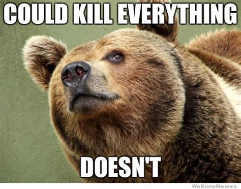 Bear Meme - bear memes fun time pinterest bear meme bears and meme