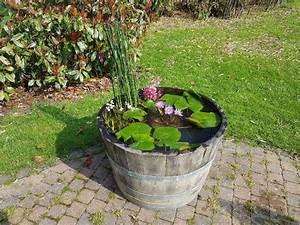 Miniteich Pflanzen Set : seerosen bl ten bezaubern im miniteich auf terrasse und balkon gartenwoche ~ Buech-reservation.com Haus und Dekorationen