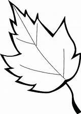 Leaves Leaf Coloring Pages Oak Printable Marijuana Maple Holly Sugar Drawing Leafs Printables Template Line Getcolorings Clipartmag Sheet Getdrawings Pa sketch template