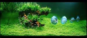 How to set up a tropical fish tank all aquarium info