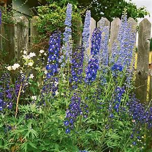 Blumen Im Garten : die sch nsten blauen blumen im garten anbauen ~ Bigdaddyawards.com Haus und Dekorationen