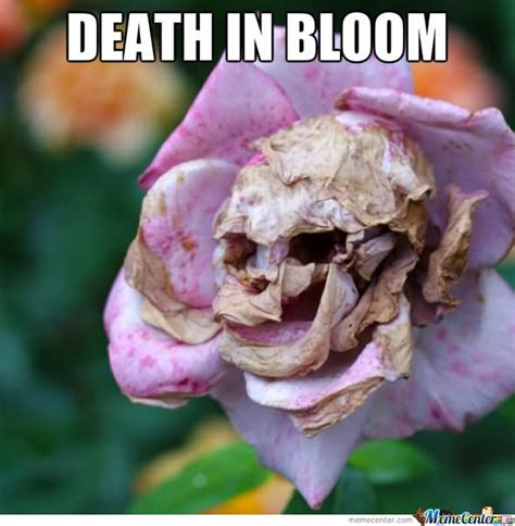 Flower Meme - funny flower meme death in bloom picture