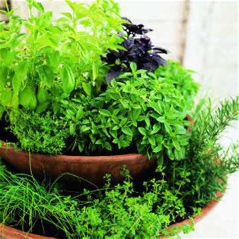 Kitchen Garden Meaning by Design Kitchen Garden Ideas Tips In Pakistan India