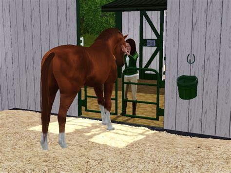 Barn Masters by Mare Barn Masters Thoroughbreds