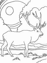 Elk Coloring Mountain Pages Rocky Printable Scenery Mountains Deer Drawing Bull Supercoloring Adult Simple Template Drawn Wapiti Coloringhome Sheets Animal sketch template