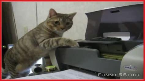 Cat Printer Meme