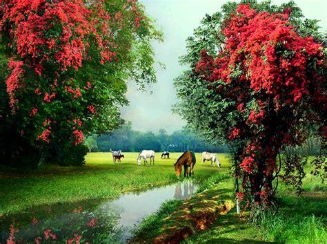beautiful rose painting  world