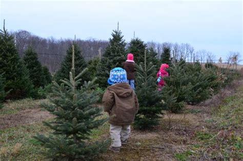 Tannenbaum Christmas Tree Farm Sioux Falls by 12 Days Of Christmas Tannenbaum Farms Gopennsvalley Com