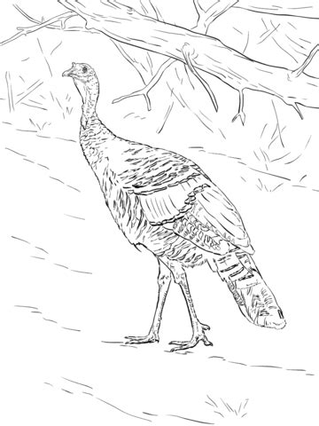 Wild Turkey Walks in The Forest coloring page | Free