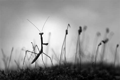 Beautiful Black And White Nature Photography  Nice Pics