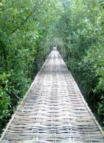 hutan mangrove wonorejo  surabaya malamcom