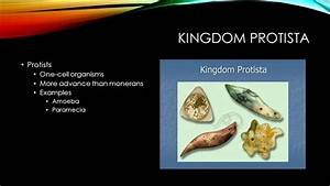 Kingdom Protista Related Keywords - Kingdom Protista Long ...