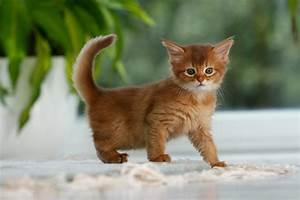 Katzen Fernhalten Von Möbeln : giardien bei katzen geliebte katze magazin ~ Sanjose-hotels-ca.com Haus und Dekorationen