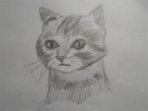 How To Draw A Realistic Cat Speed Drawing (narrated