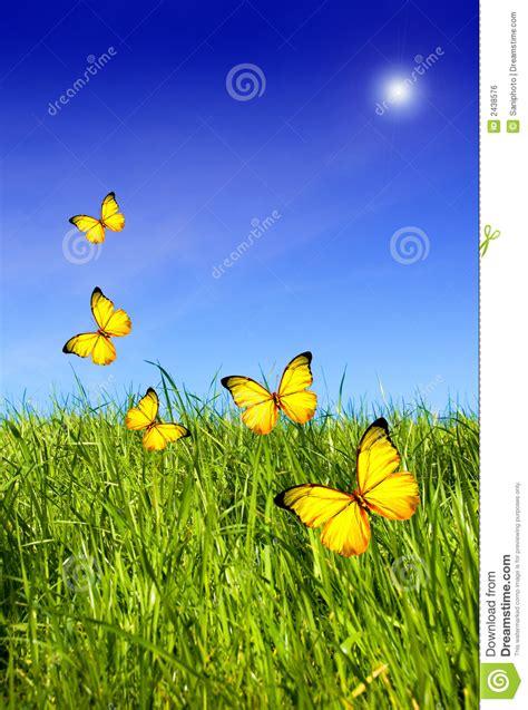 butterflies  grass stock photo image  butterflies