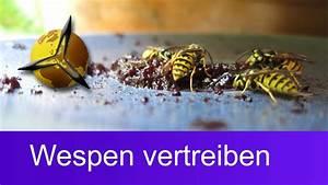 Was Hilft Gegen Wespen : wespenplage wespen vertreiben was hilft gegen wespen youtube ~ Whattoseeinmadrid.com Haus und Dekorationen